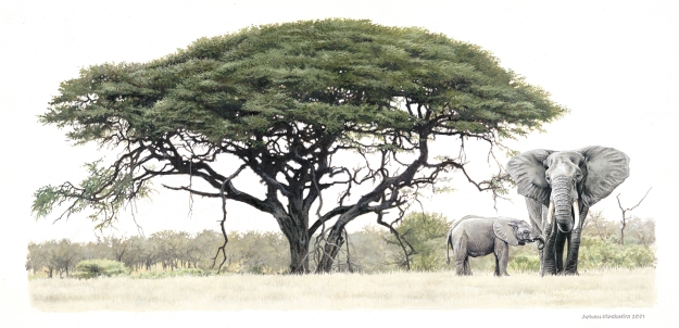 This beautiful image of an elephant under an acacia tree, by Johan Hoekstra, is just what I've been searching for as tattoo inspiration.